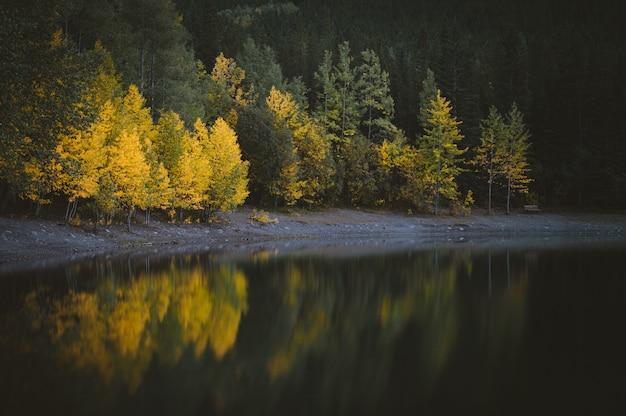 Hermosa vista del agua cerca del bosque con árboles verdes y amarillos