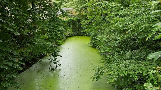 Hermosa vista del agua quieta en un estanque rodeado de árboles y plantas
