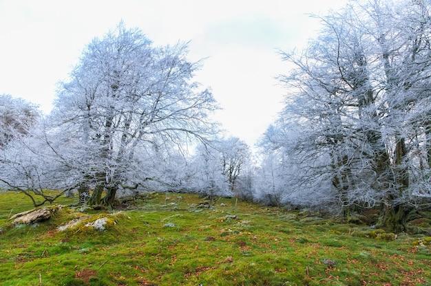 Hermosa vista de árboles desnudos helados en una montaña