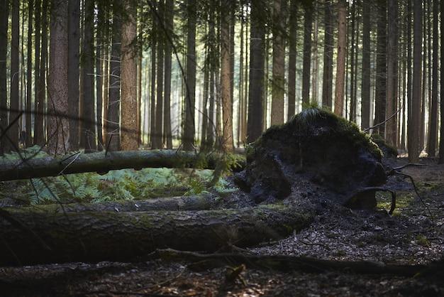 Hermosa vista de árboles rotos cubiertos de barro y musgo en medio del bosque