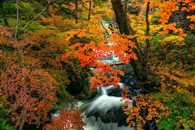 Hermosa vista del arroyo natural de las cascadas de ryuzu fluyen sobre rocas