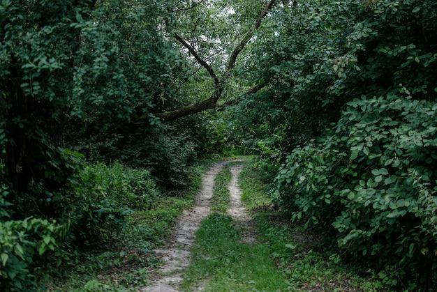 Hermosa vista de un camino cubierto de hierba rodeado de plantas y árboles.