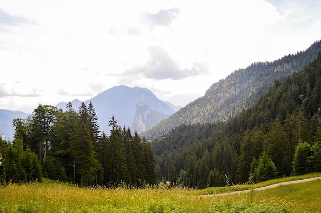 Hermosa vista de un campo con flores y altas montañas en alemania