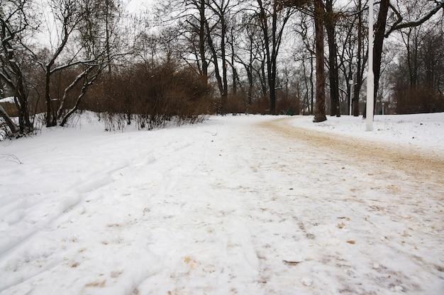 Hermosa vista de la carretera del parque y los árboles cubiertos de nieve en un día de invierno