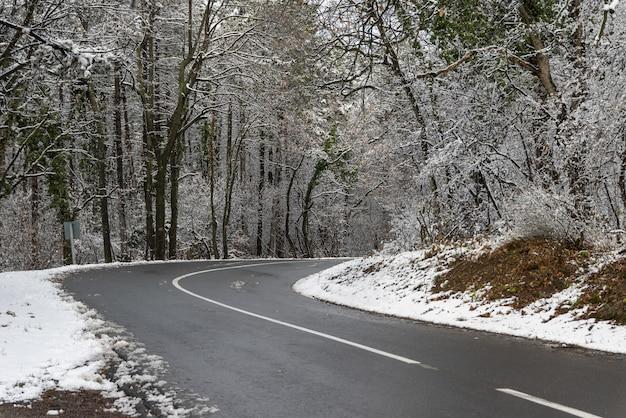 Hermosa vista de una carretera rodeada de árboles cubiertos de nieve.