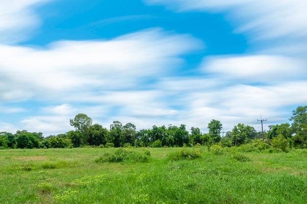 Hermosa vista del cielo y el verde en el campo
