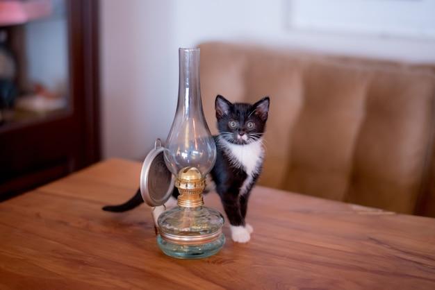 Hermosa vista de un gatito blanco y negro de pie junto a una linterna sobre una mesa