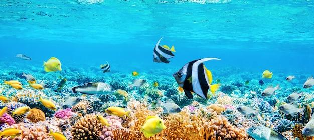 Hermosa vista panorámica submarina con peces tropicales y arrecifes de coral