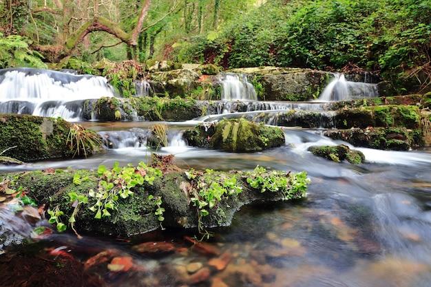 Hermosa vista de la pequeña cascada y grandes piedras cubiertas de plantas en la selva