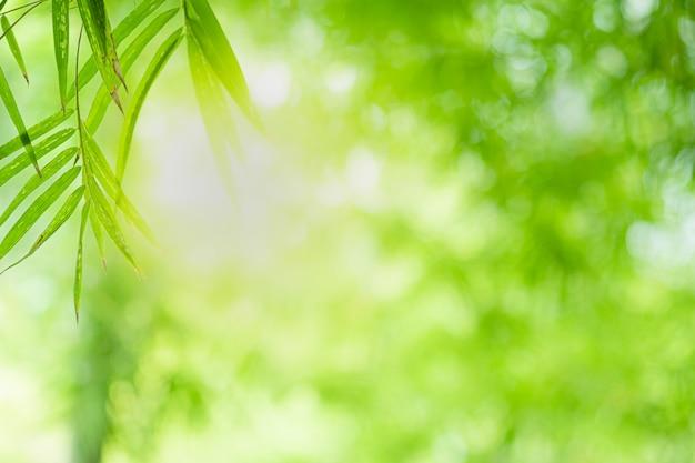 La hermosa vista del primer de la hoja de bambú verde de la naturaleza en el verdor empañó el fondo con luz del sol y el espacio de la copia. se utiliza para el fondo de verano de ecología natural y el concepto de fondo de pantalla fresco.