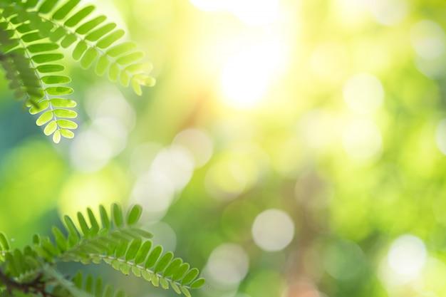 La hermosa vista del primer de la hoja verde de la naturaleza en el verde empañó el fondo con luz del sol y el espacio de la copia.