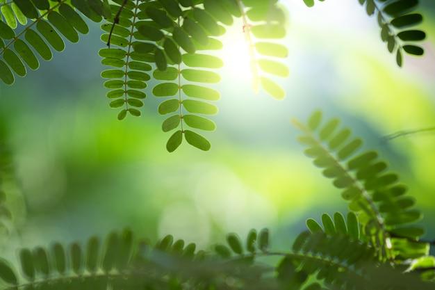 La hermosa vista del primer de la hoja verde de la naturaleza en el verdor empañó el fondo con luz del sol y el espacio de la copia. se utiliza para el fondo de verano de ecología natural y el concepto de fondo de pantalla fresco.