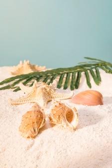 Hermosas conchas y hojas en la playa