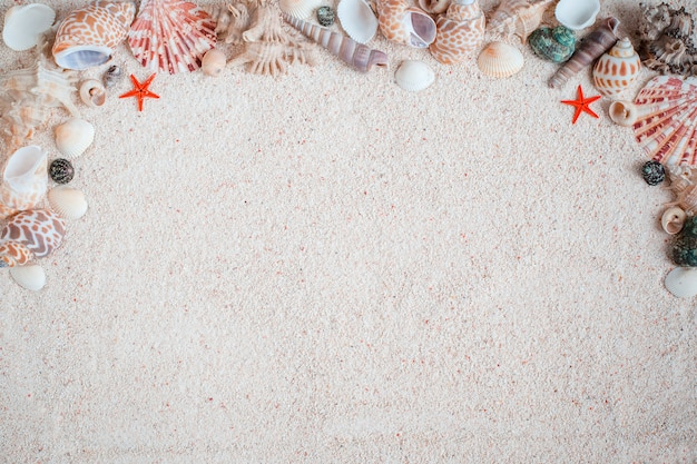 Hermosas diferentes conchas de mar sobre arena blanca. vista desde arriba. como fondo