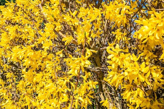Hermosas flores amarillas en el árbol