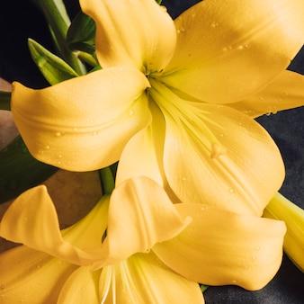 Hermosas flores amarillas frescas en rocío