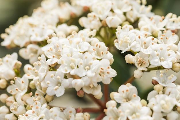 Hermosas flores blancas frescas