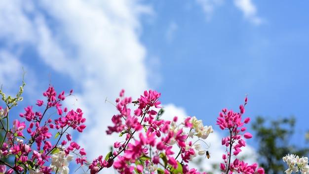 Hermosas flores blancas y rosadas y hermosas hojas verdes en días soleados