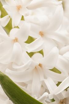 Hermosas flores blancas tropicales