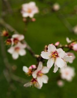 Hermosas flores borrosas al aire libre