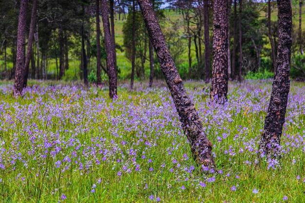 Hermosas flores en el bosque de árboles