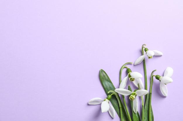 Hermosas flores de campanillas de primavera sobre fondo de color, espacio para texto