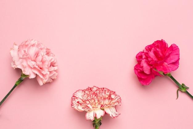 Hermosas flores de clavel rosa con espacio de copia sobre fondo rosa