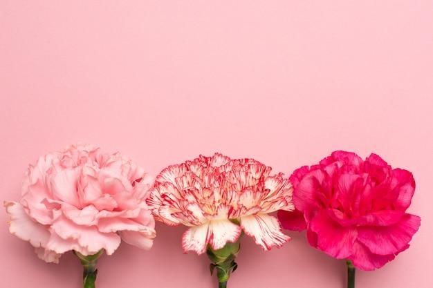 Hermosas flores de clavel rosa sobre fondo rosa