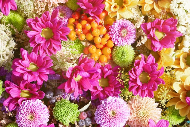 Hermosas flores de color rosa otoñal de fondo coloridas flores de crisantemo vista superior