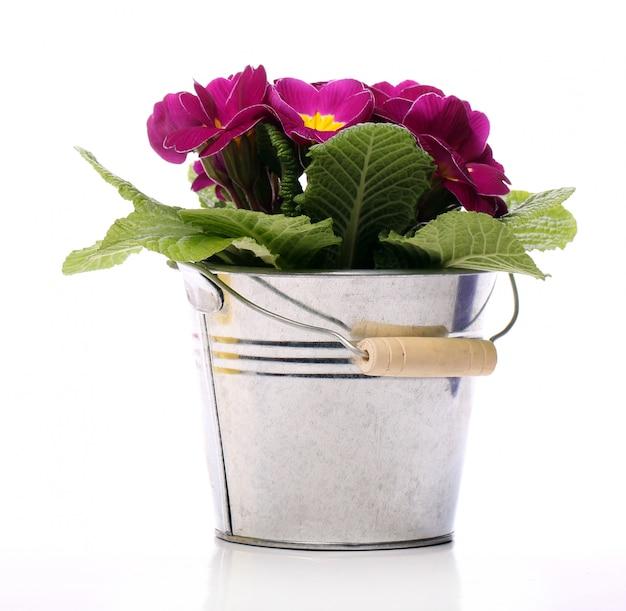 Hermosas flores de color violeta