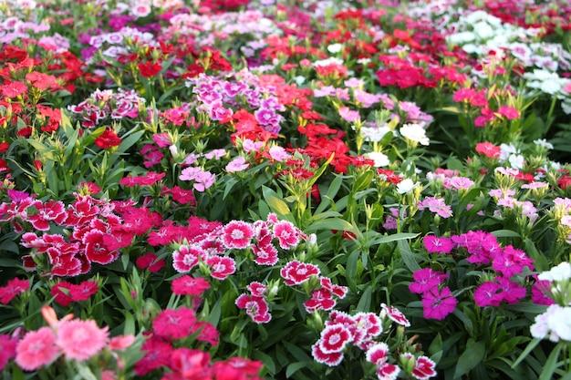 Hermosas flores cultivadas en el jardín.