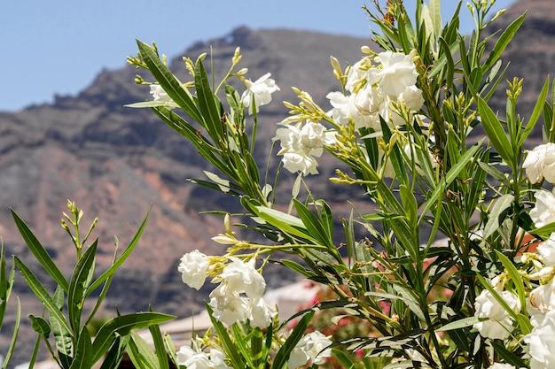 Hermosas flores exóticas blancas con fondo borroso