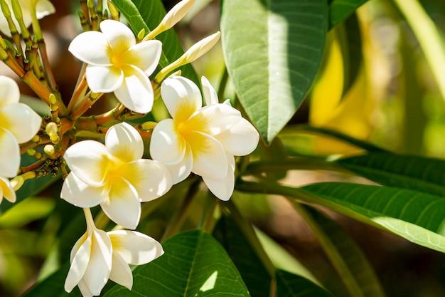 Hermosas flores exóticas blancas