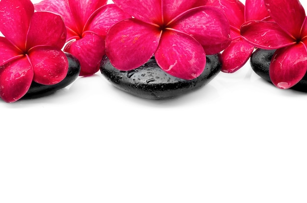 Hermosas flores de frangipani con piedra zen