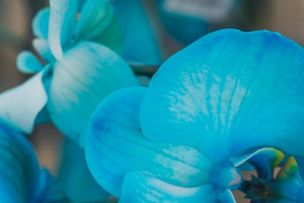 Hermosas flores frescas azules