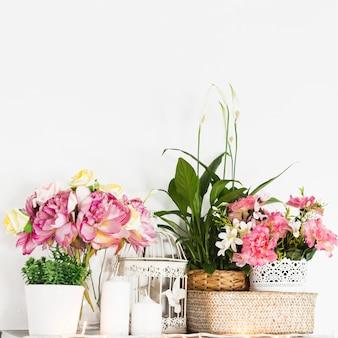 Hermosas flores frescas contra la pared
