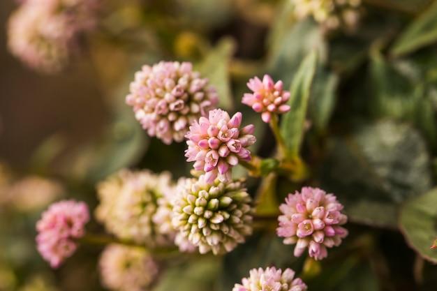 Hermosas flores frescas rosadas del prado