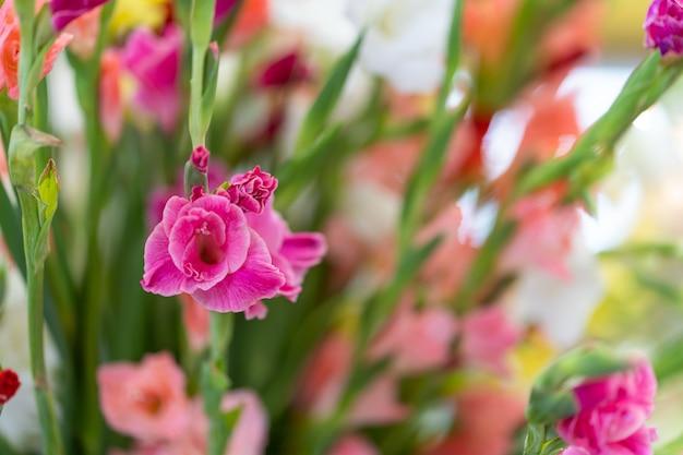 Hermosas flores de gladiolo multicolor en florero.