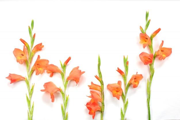 Hermosas flores de gladiolo naranja