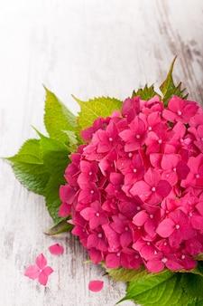 Hermosas flores de hortensia rosa