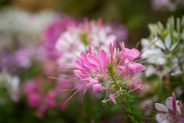 Hermosas flores en el jardín para el fondo