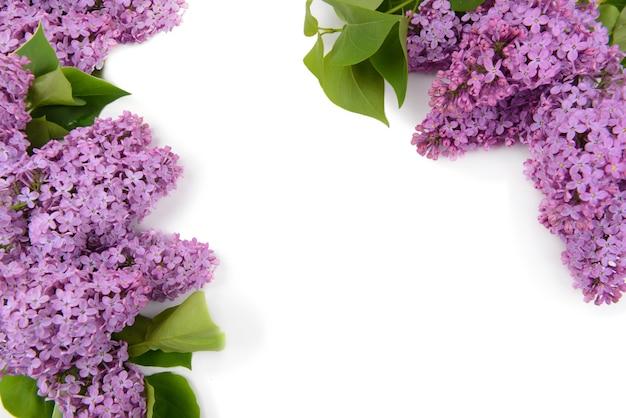 Hermosas flores lilas sobre superficie blanca