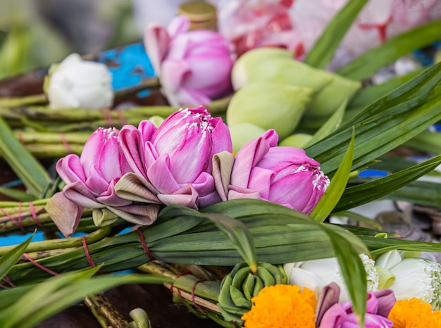 Hermosas flores de loto para hacer méritos en el día de buda