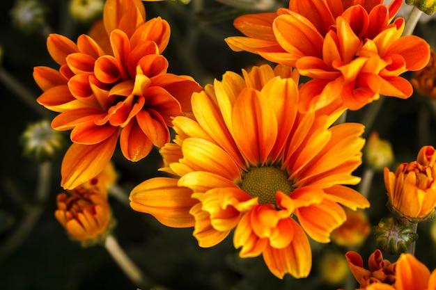 Hermosas flores de naranja