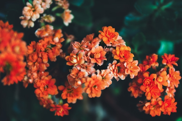 Hermosas flores naranjas