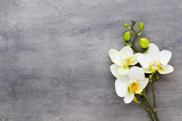 Hermosas flores de orquídeas en hormigón