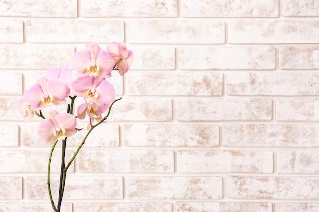 Hermosas flores de orquídeas en ladrillo