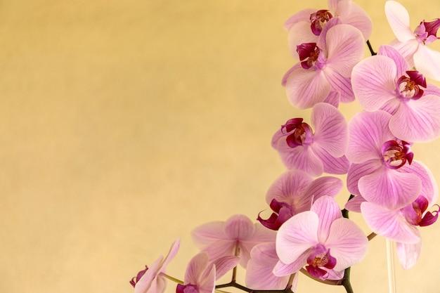 Hermosas flores de orquídeas phalaenopsis, sobre fondo amarillo