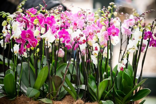 Hermosas flores de orquídeas tropicales en macetas