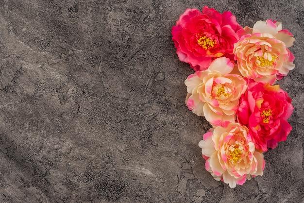 Hermosas flores de peonía rosa sobre un fondo concreto
